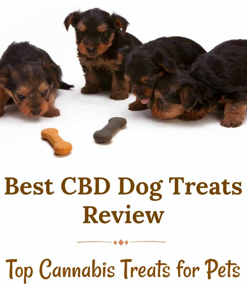Best CBD Dog Treats Review – Top Cannabis Treats for Pets