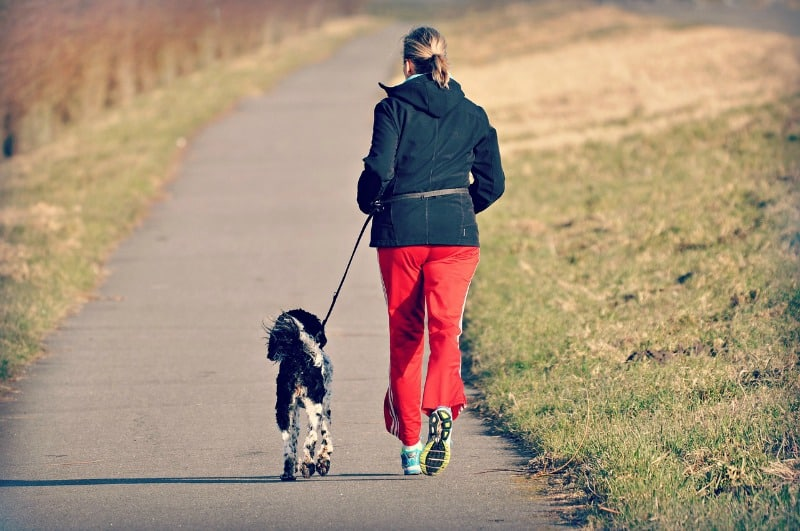 Diet Buddies: How You and Your Dog Can Lose Weight Together