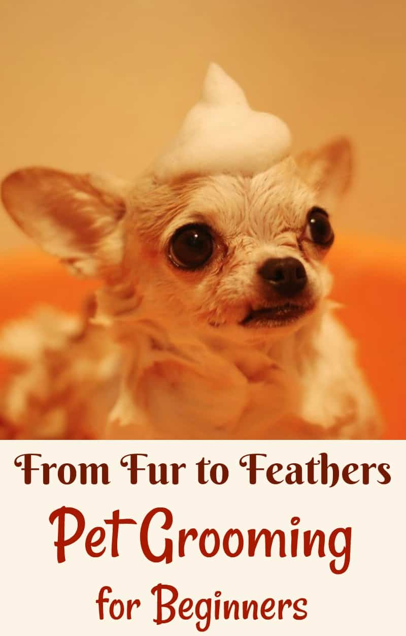 From Fur to Feathers — Pet Grooming for Beginners