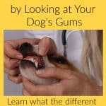How to Assess Health by Looking at Your Dog's Gums