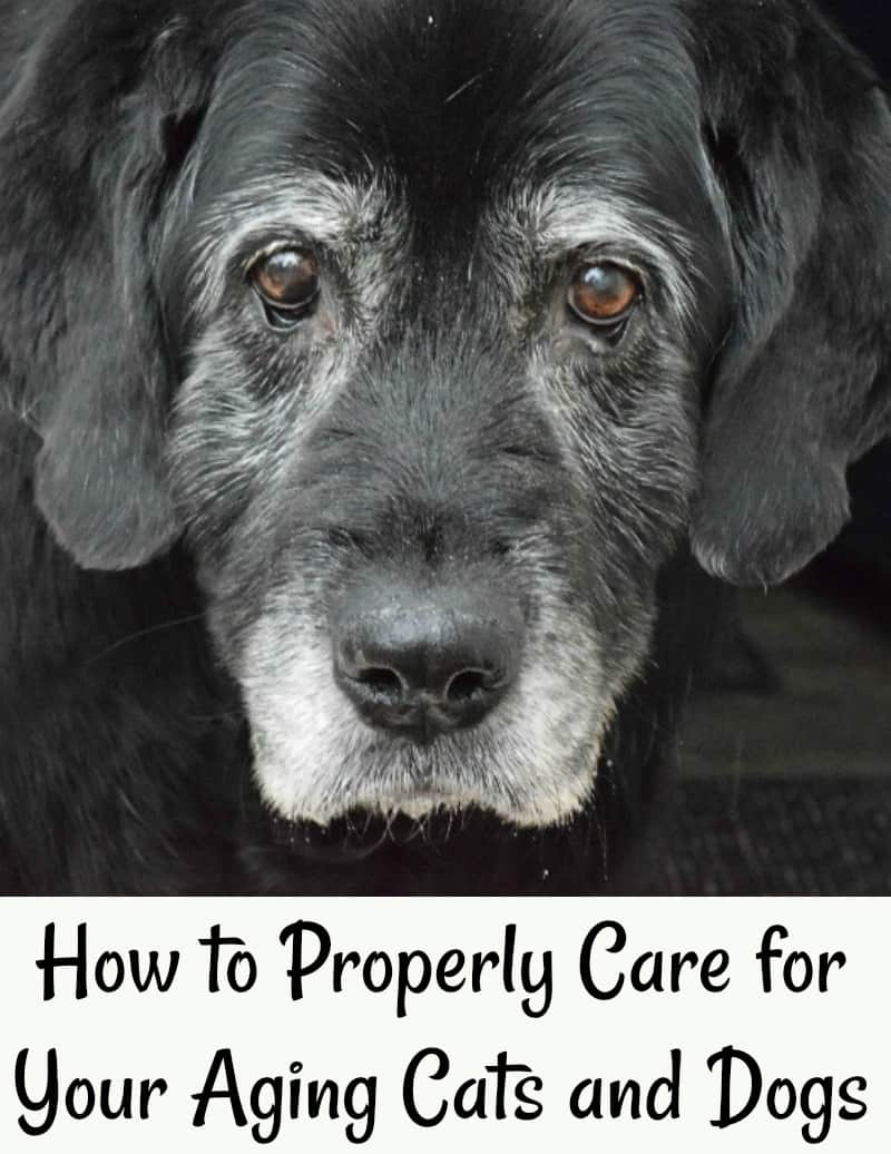 How to Properly Care for Your Aging Cats and Dogs