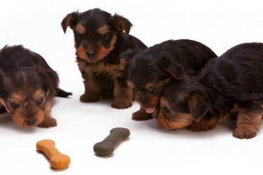 Best CBD Dog Treats Review – Top Cannabis Treats for Pets
