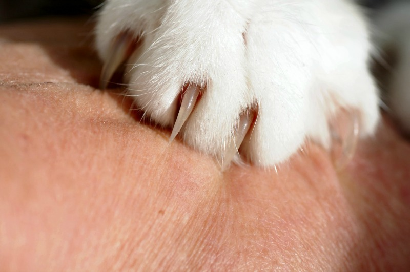Home Remedies for Animal Bites, Cat or Dog Bite Treatment