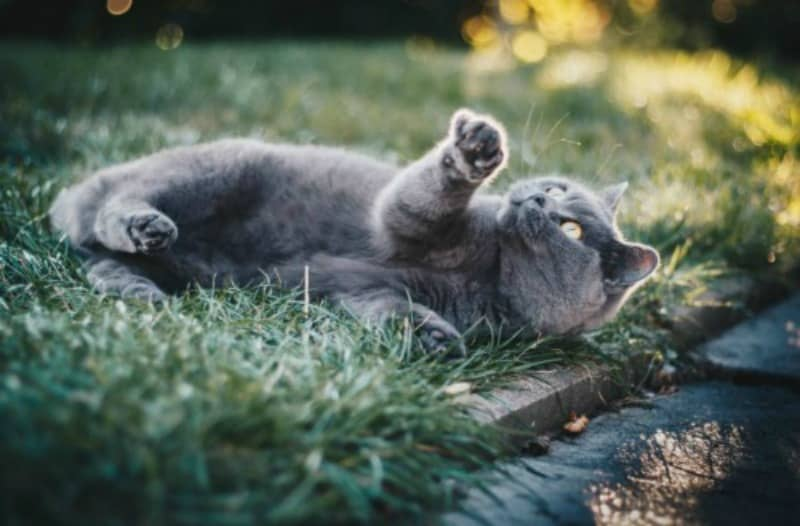 5 Tips to Help Keep Your OutdoorLoving Cat Safe and Happy