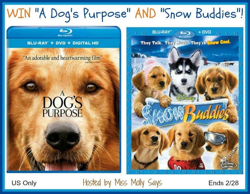 A Dog's Purpose and Snow Buddies giveaway