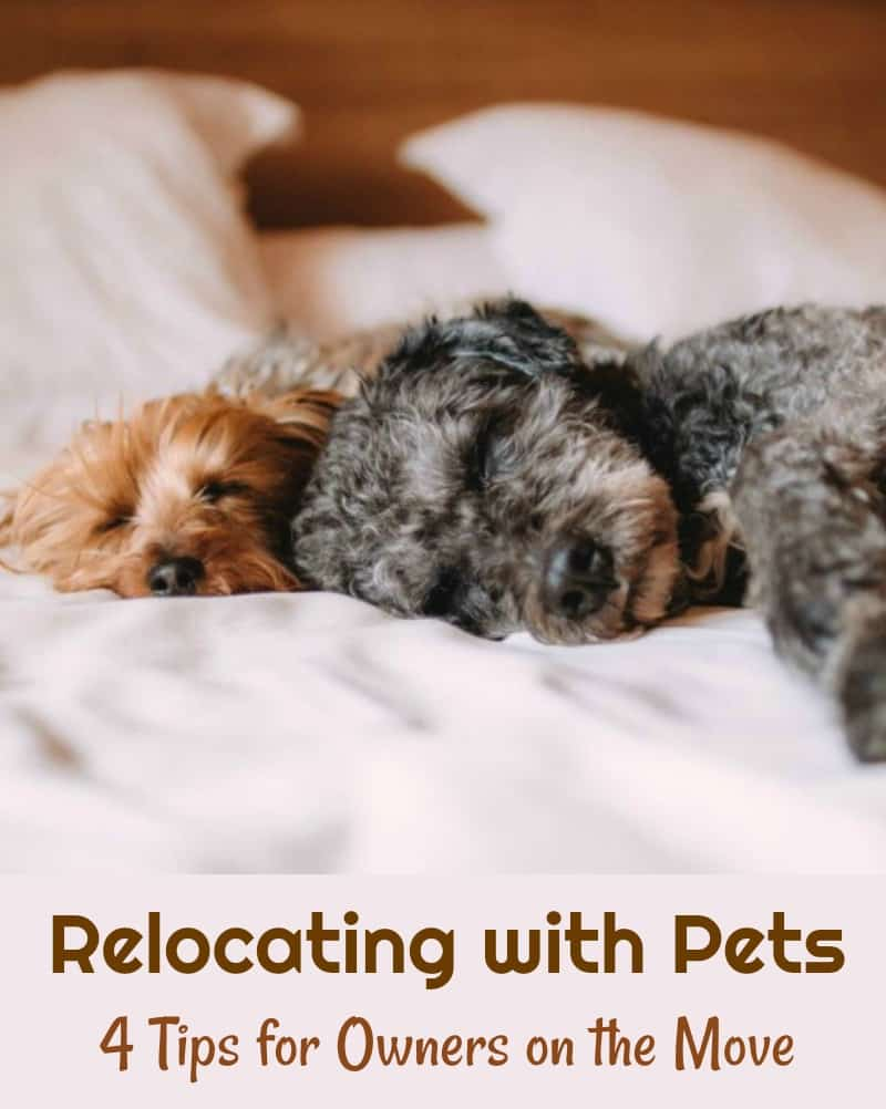 Relocating with Pets 4 Tips for Owners on the Move