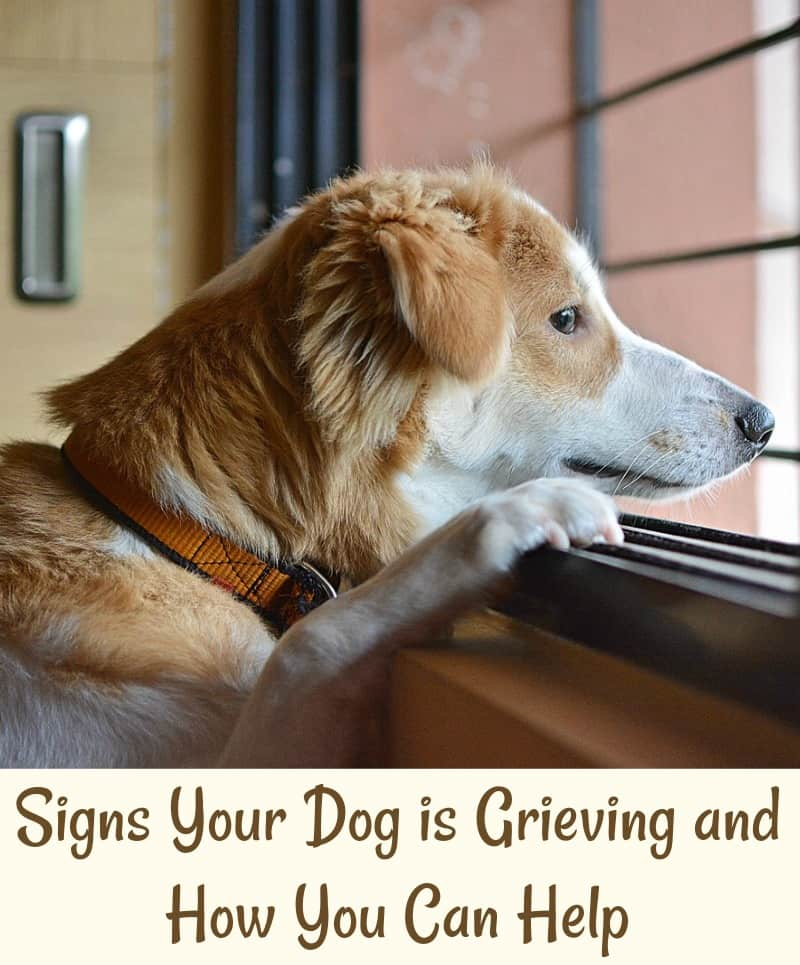 Signs Your Dog is Grieving and How You Can Help