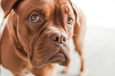 What is Dog Separation Anxiety