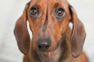 What are the Signs of Stress in Dogs and How to Reduce it