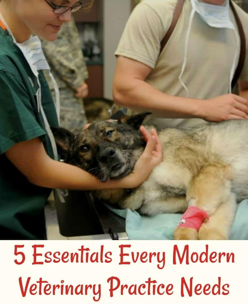 5 Essentials Every Modern Veterinary Practice Needs
