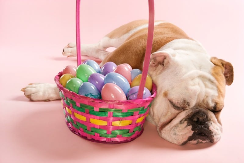 Easter Hazards for Dogs and Cats