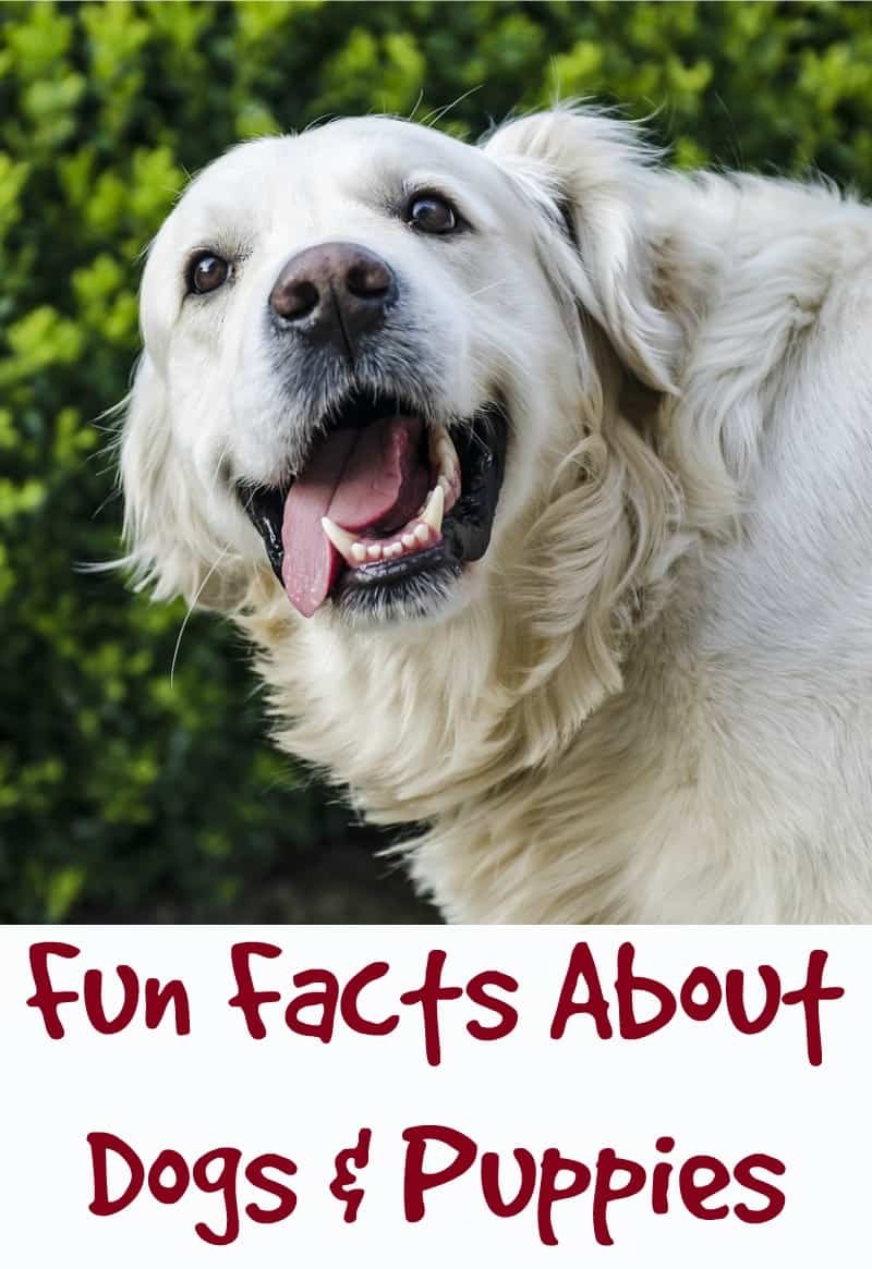 Fun Facts About Dogs and Puppies