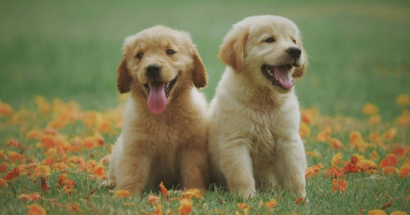 Happy and Healthy Puppy 4 Milestones Every Owner Should be Aware of and How to Help