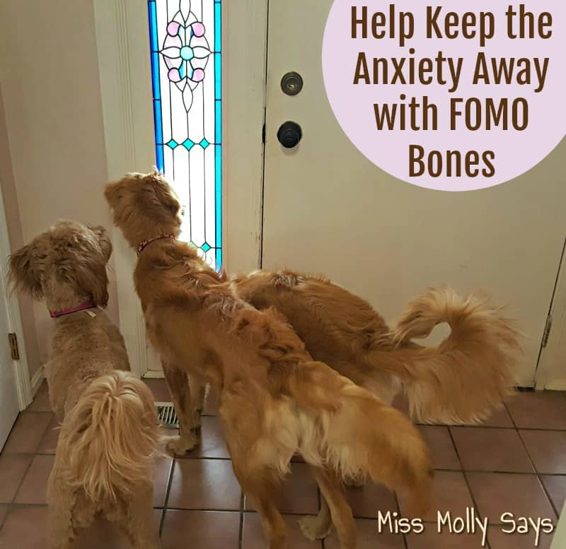 Help Keep the Anxiety Away with FOMO Bones
