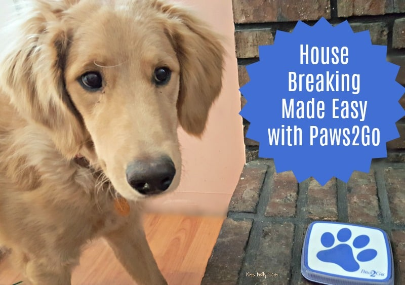 House Breaking Made Easy with Paws2Go
