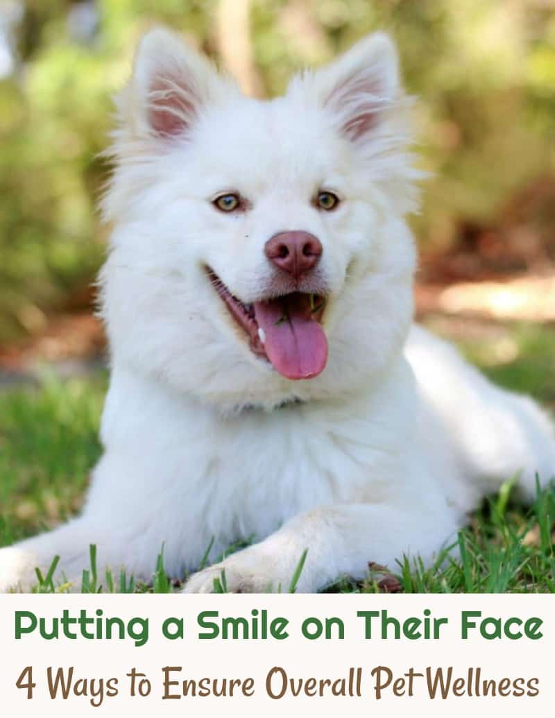 Putting a Smile on Their Face 4 Ways to Ensure Overall Pet Wellness