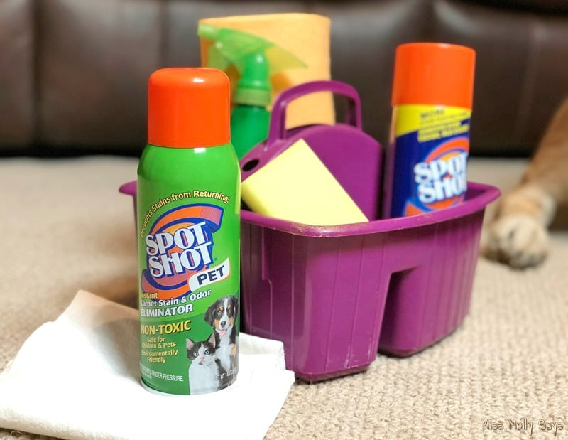 5 Spring Cleaning Tips Specifically for Pet Owners #SpotShot