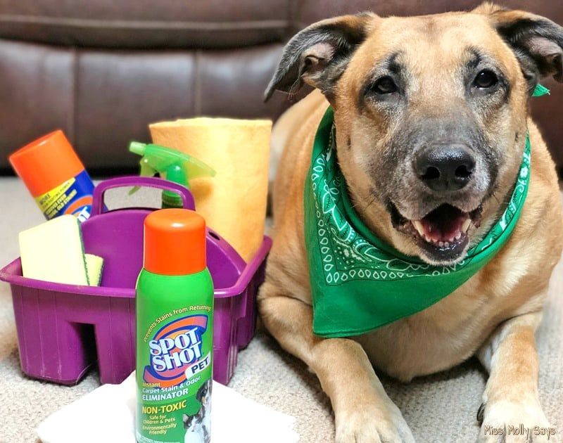 5 Spring Cleaning Tips Specifically for Pet Owners + a Free Spring Cleaning Checklist & Calendar #SpotShot