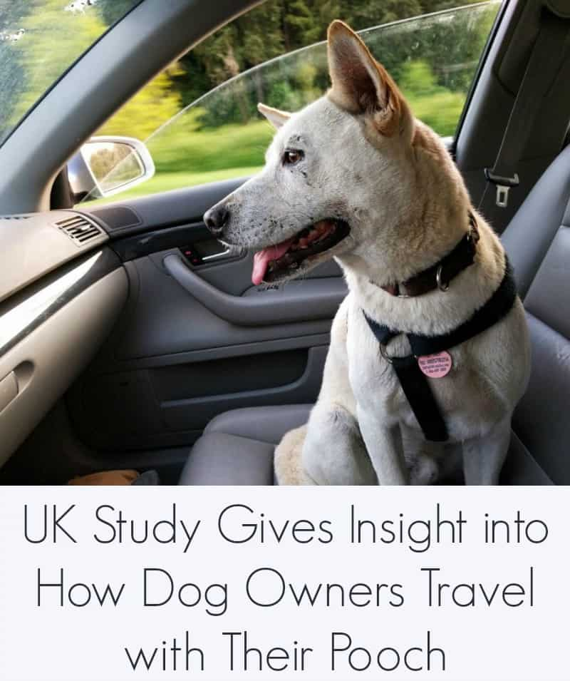 UK Study Gives Insight into How Dog Owners Travel with Their Pooch