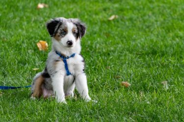 Adopting a Dog? 4 Tips for Preparing Your Home for Your New Family Member