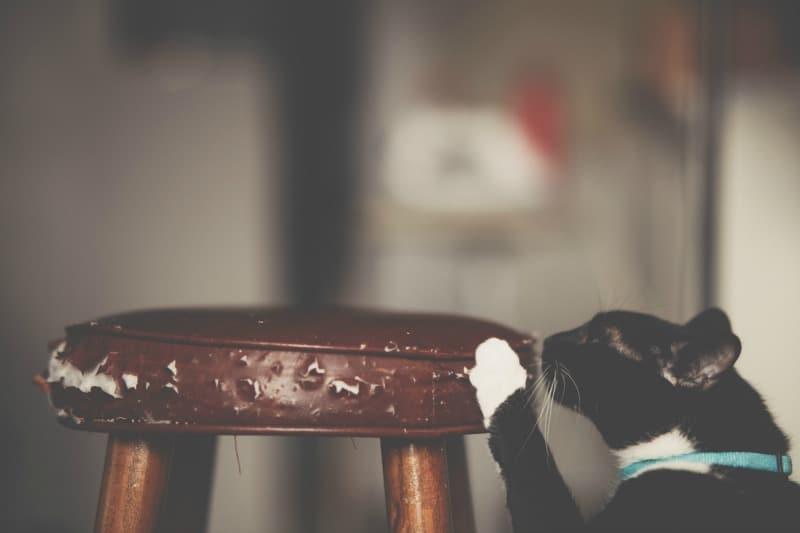A Cat Scratch Post is a Cat's Best Friend