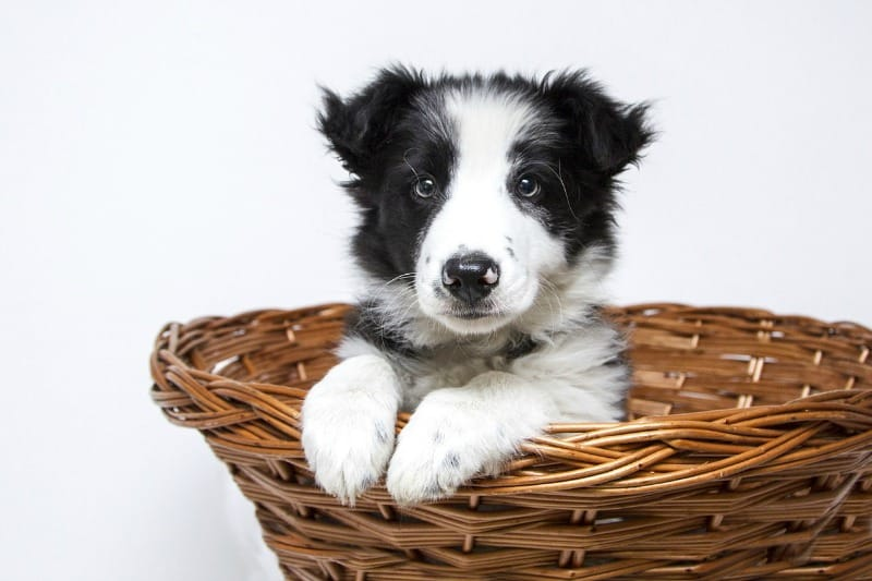 Tips For Taking Care Of Your New Dog