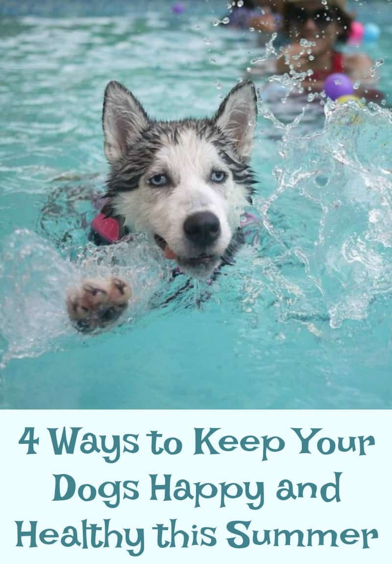 4 Ways to Keep Your Dogs Happy and Healthy this Summer
