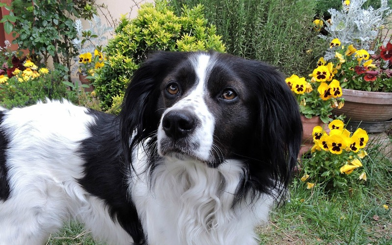 Common Garden Plants That Can Harm Your Dog