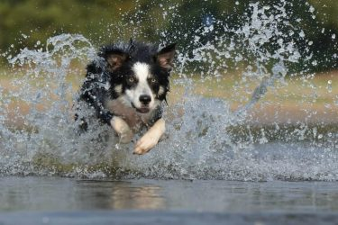 How to Trick Your Pet into Healthy Habits 4 Tips for New Owners