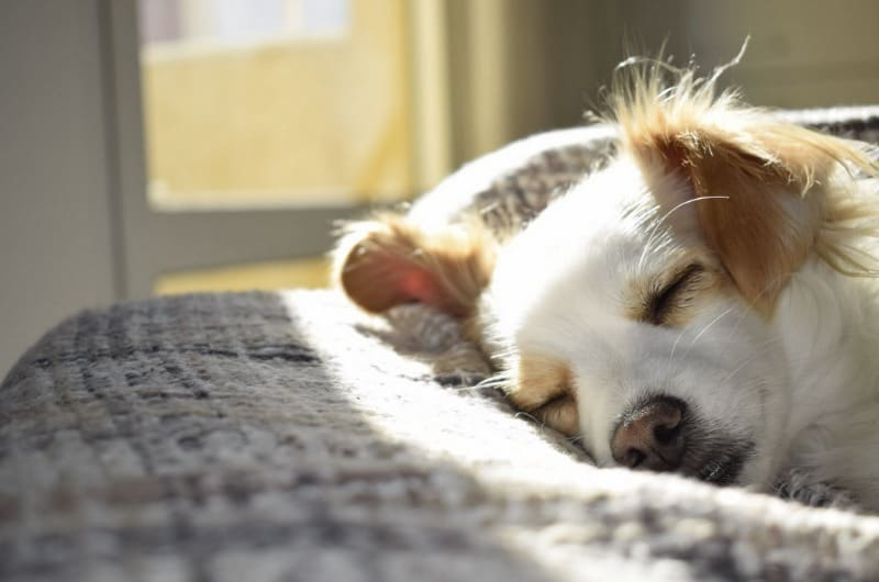 Summer Safety 4 Ways to Create a Spot to Cool Down for Your Pets