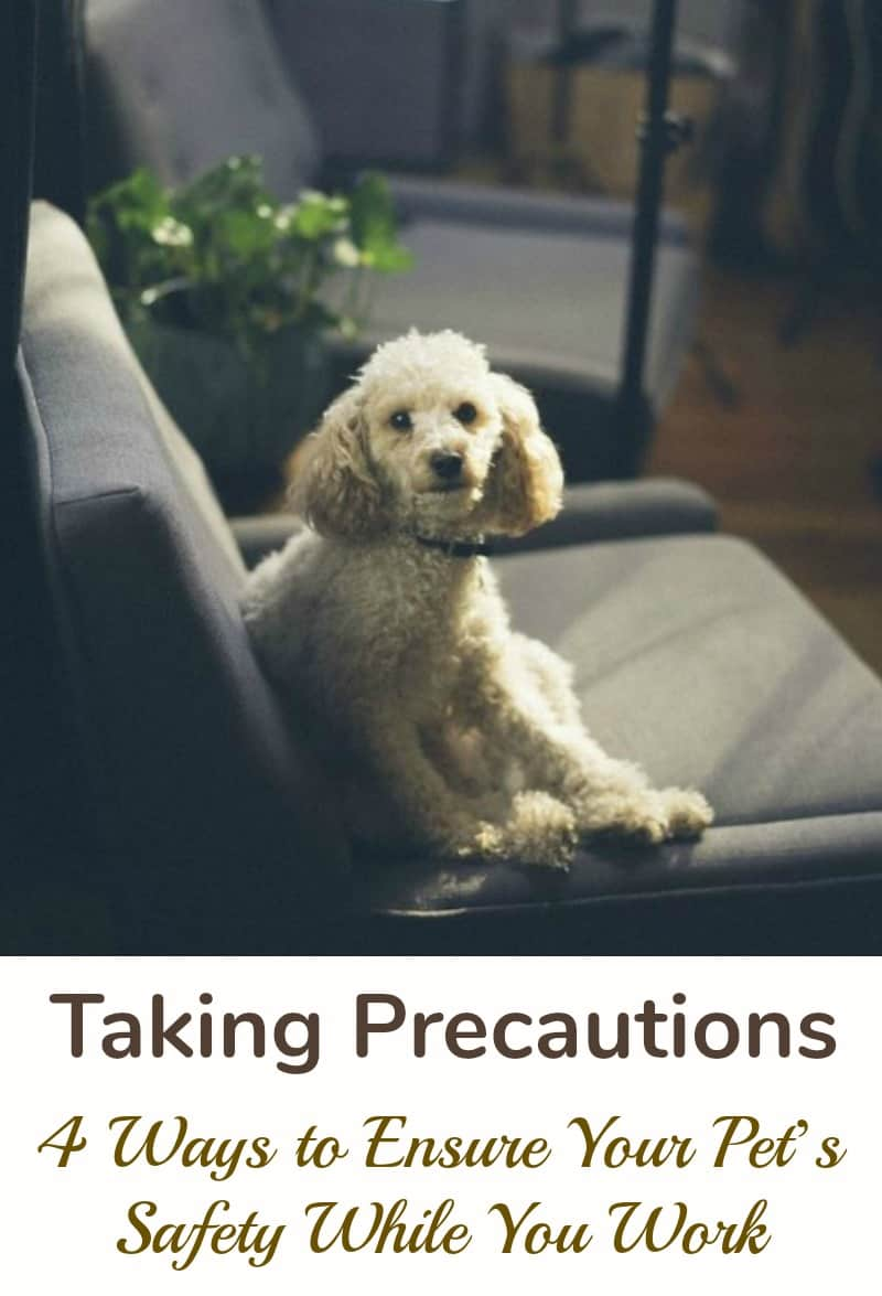 Taking Precautions 4 Ways to Ensure Your Pets Safety While You Work
