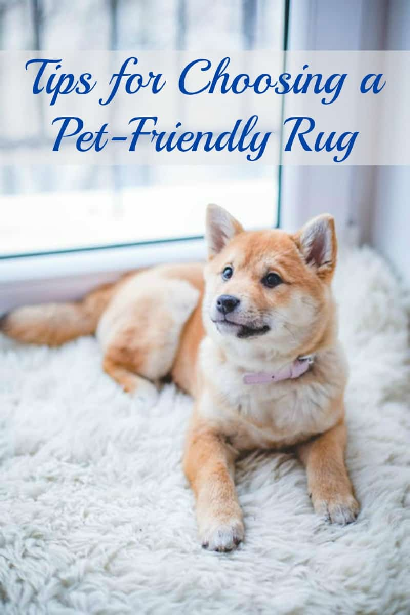 Tips for Choosing a Pet-Friendly Rug