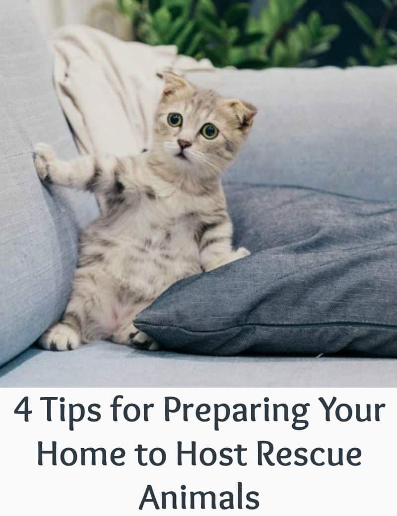4 Tips for Preparing Your Home to Host Rescue Animals