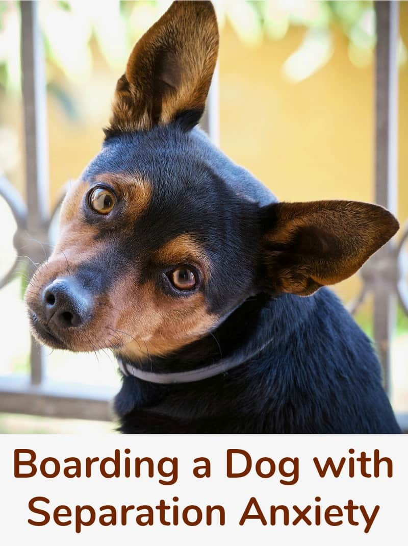 Boarding a Dog with Separation Anxiety