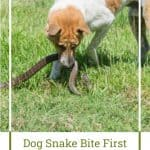 Dog Snake Bite First Aid for Your Dog