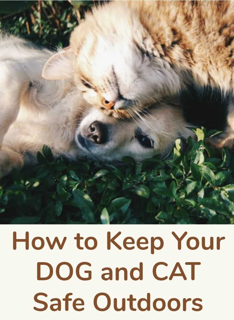 How to Keep Your Dog and Cat Safe Outdoors