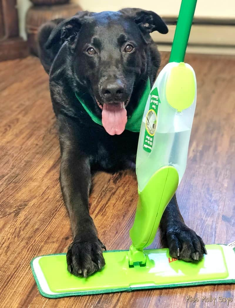 Keeping Up With Pet Messes is Easy with the Freedom Spray Mop #EmbraceLifesMesses #TheLibmanCompany