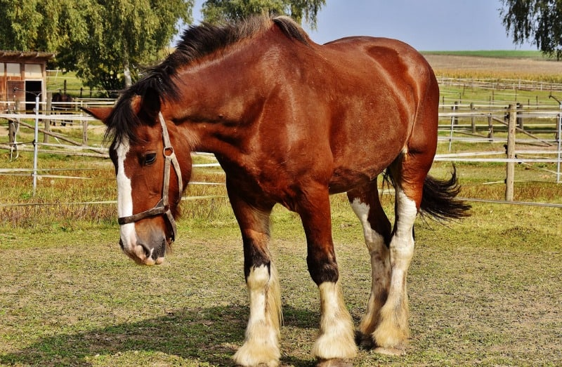 Owning Your First Horse 4 Care Tips You Might Not Know About