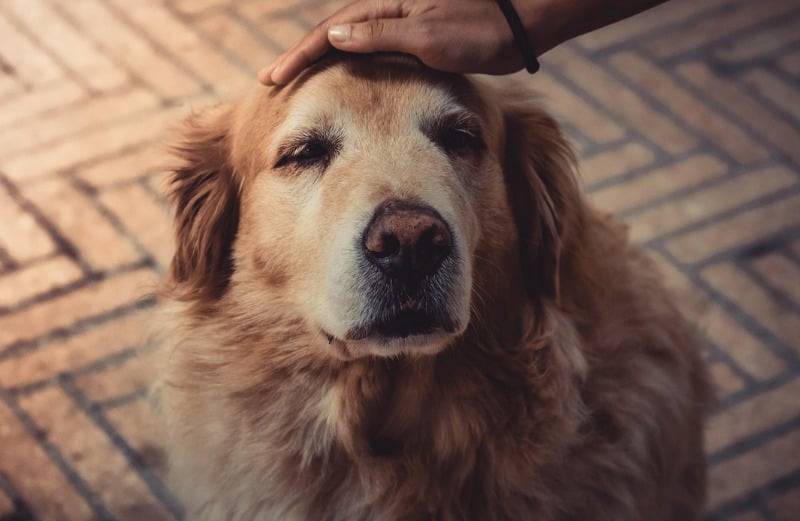 Rescuing a Senior Dog? 4 Tips for Taking Care of an Older Animal