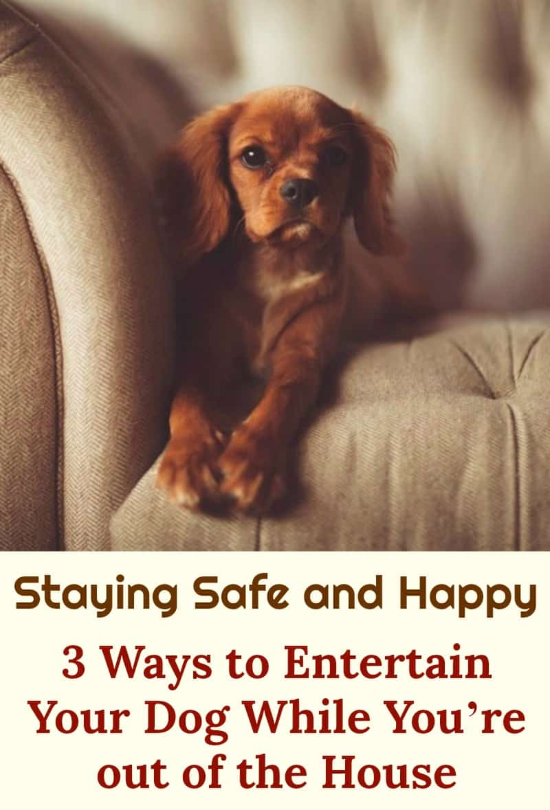 Staying Safe and Happy 3 Ways to Entertain Your Dog While You're Out of the House