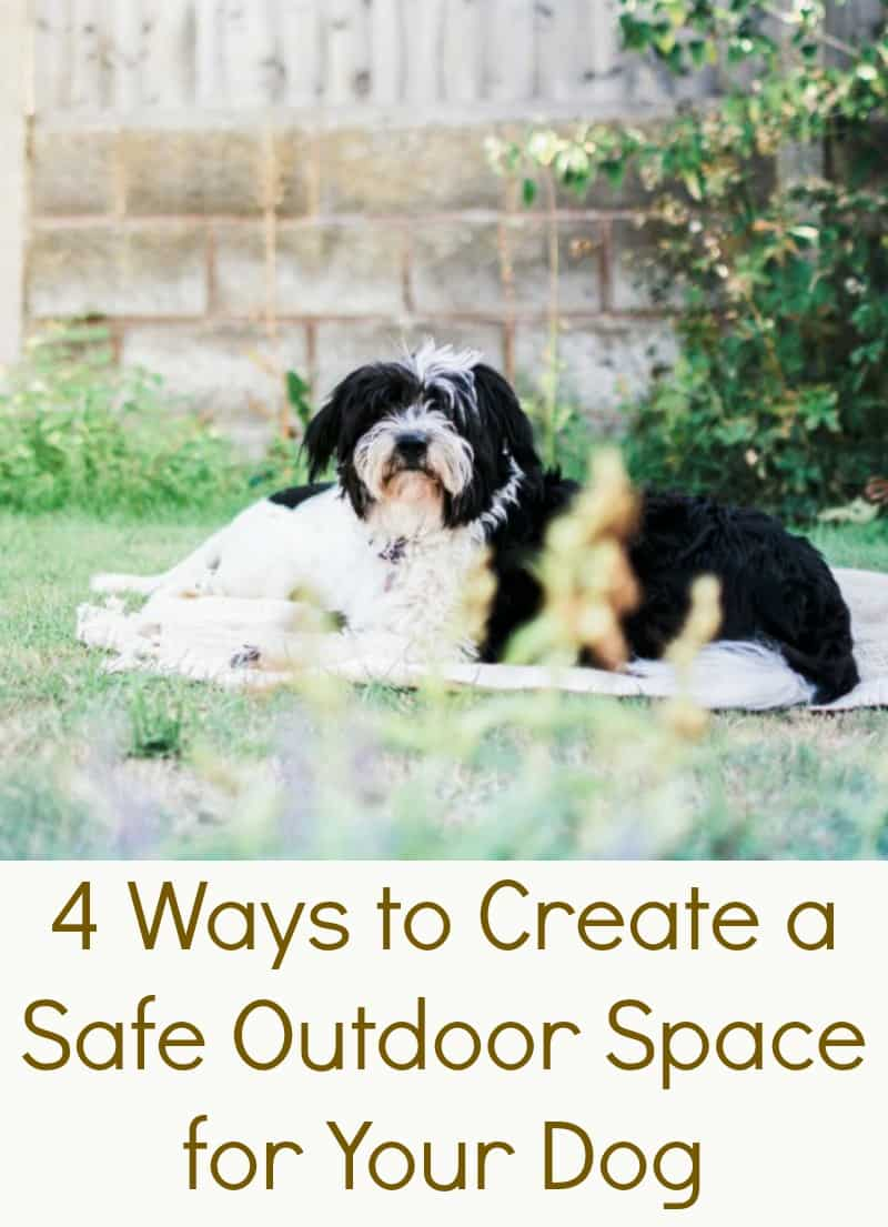 4 Ways to Create a Safe Outdoor Space for Your Dog