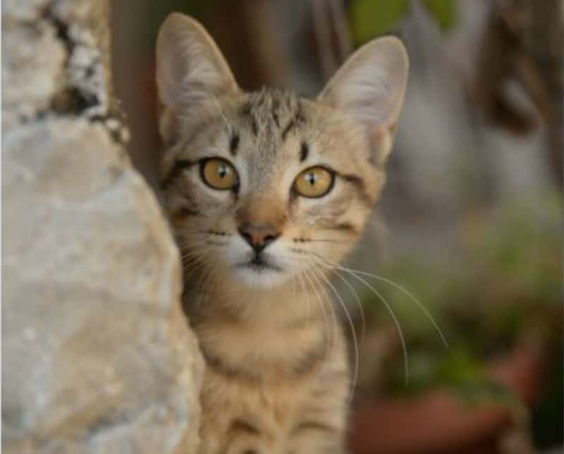 Home Care Considerations When You Own an Outdoor Cat