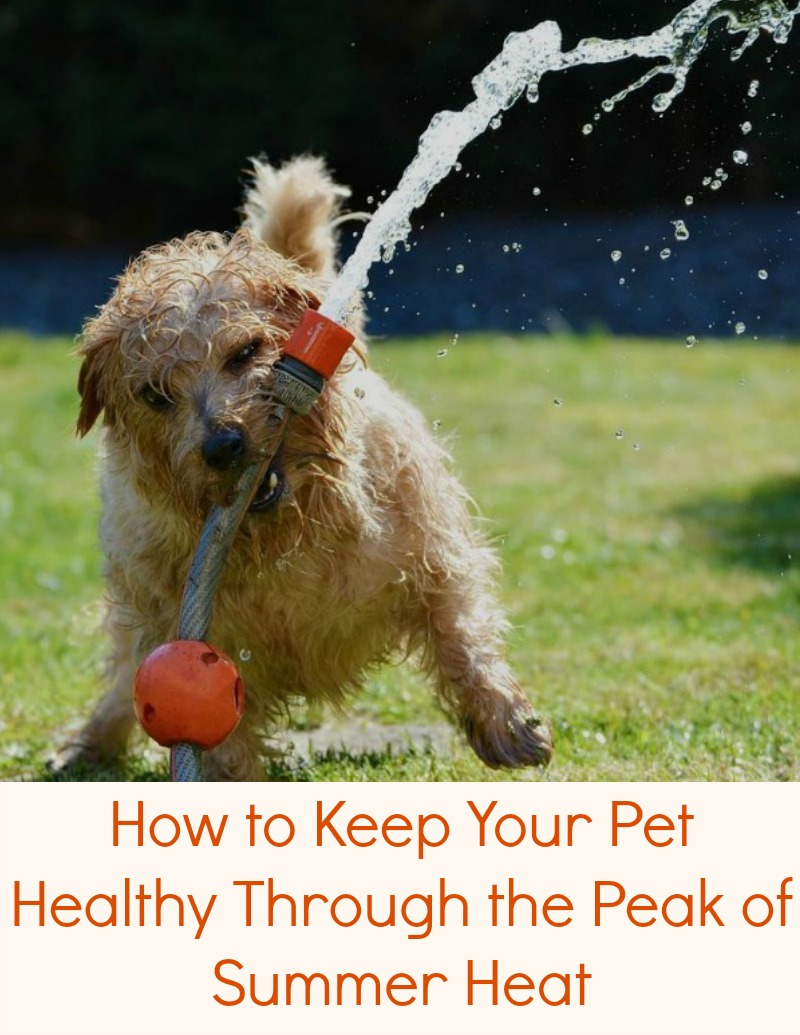 How to Keep Your Pet Healthy Through the Peak of Summer Heat