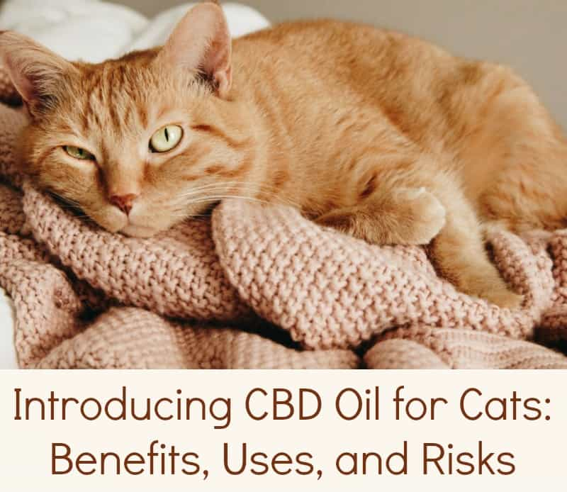 Introducing CBD Oil for Cats: Benefits, Uses, and Risks