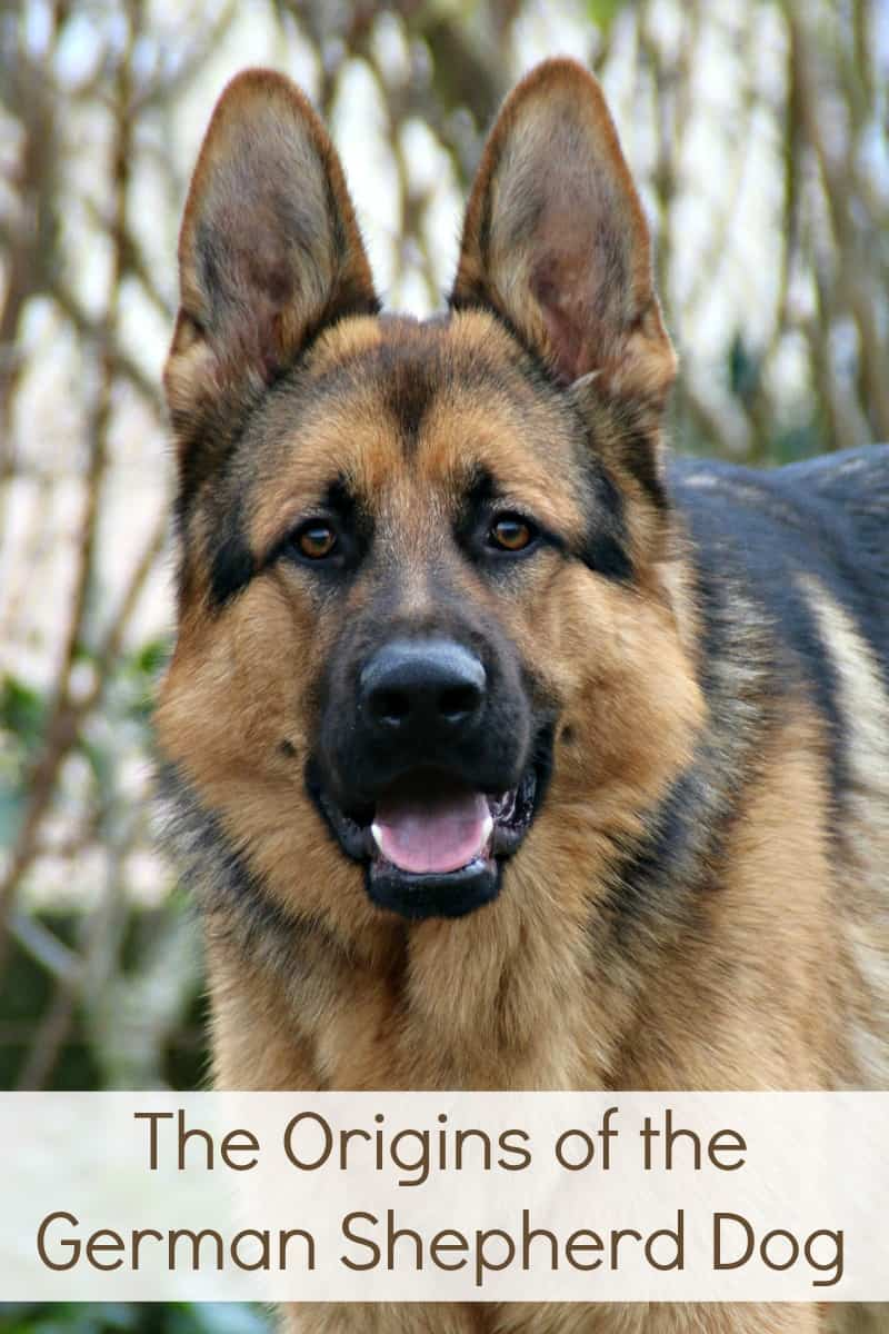 The Origins of the German Shepherd Dog