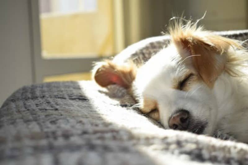Ways to Remove Dog Smell from Your House