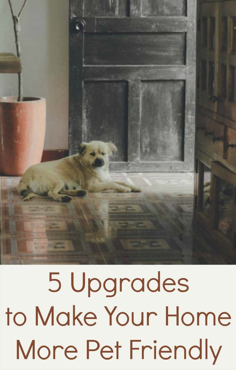 5 Upgrades to Make Your Home More Pet Friendly