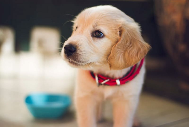Adoption Day? 4 Items to Buy as Soon as You Get Your New Dog