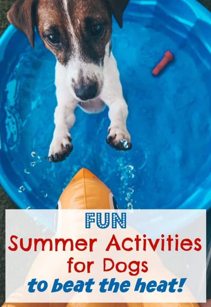 Fun Summer Activities for Dogs to Beat the Heat #SpotShot