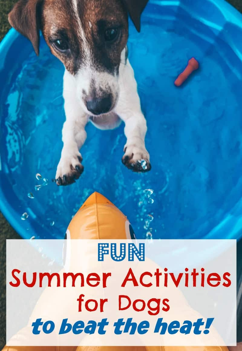 Fun Summer Activities for Dogs to Beat the Heat #petsafety #SpotShot